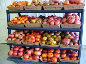 Grower Ray Miller displays heirloom tomatoes by variety.