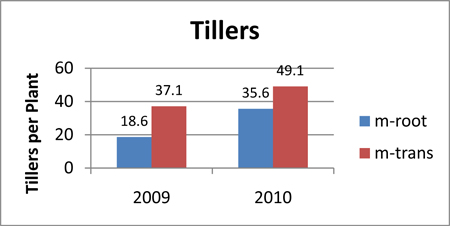 Tillers per Plant in 2009 and 2010.
