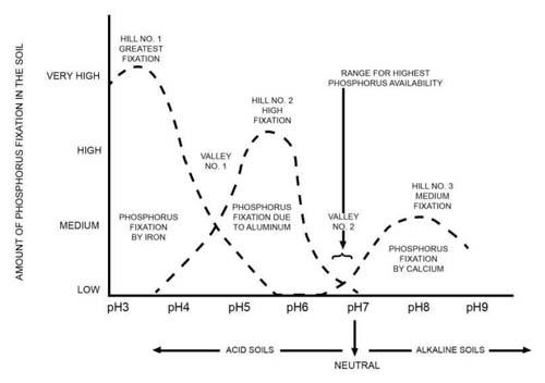 phosphorus availability in soil pdf