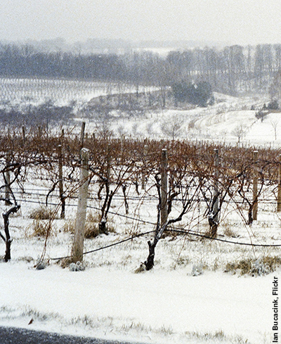 Winery in winter. Photo by Ian Bucacink, Flickr.com