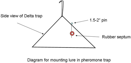 Diagram for mounting lure in pheromone trap