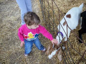 Girl petting a goat