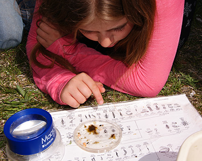 Identifying aquatic macroinvertebrates
