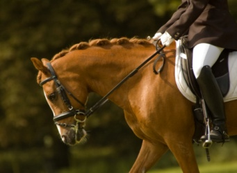 Relating learning theory to teaching horses