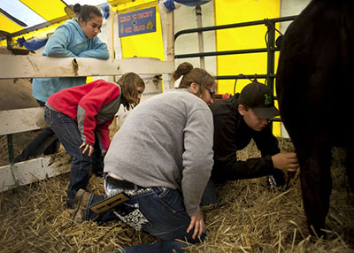 Wixom shows youth how to clip a beef cow