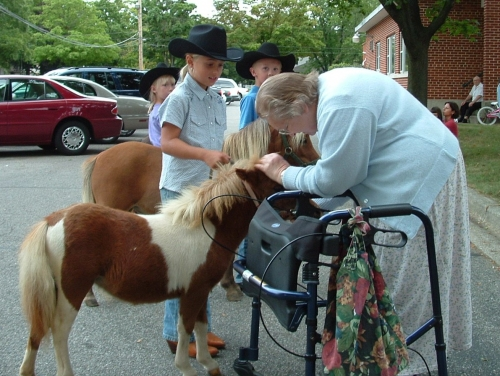 horse pet therapy