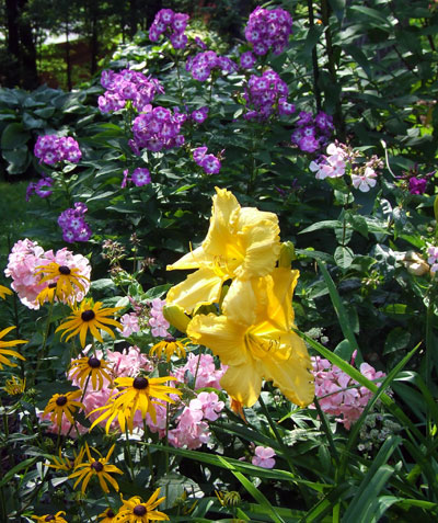 Fertilizing established perennial gardens feed em and weep msu perennials such as tall phlox phlox and daylily hemerocallis benefit from fertilization in spring and again by sidedressing right after bloom mightylinksfo
