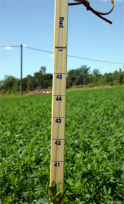 An example of a PEAQ stick measurement taken in 2008 during better growing conditions.