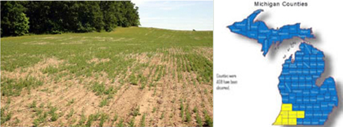 Left, damage to a field as a result of Asiatic garden beetle infestation. Right, counties where Asiatic garden beetles have been observed.