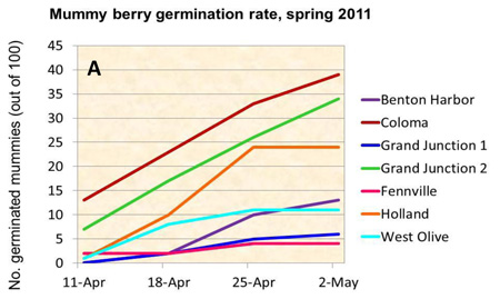 Figure A: Graph showing mummy berry germination rate, spring 2011.