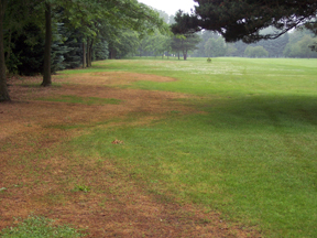 Damage to golfcourse