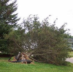 Damage from Oct '03 storm