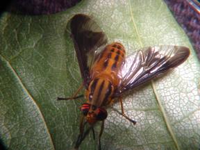 Deer flies and mosquitoes - MSU Extension