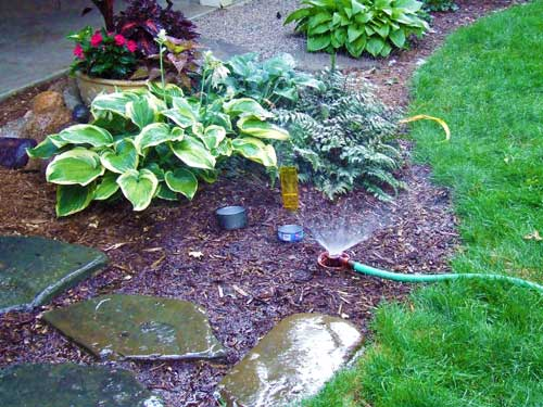 The Last Word On Watering Perennials Msu Extension