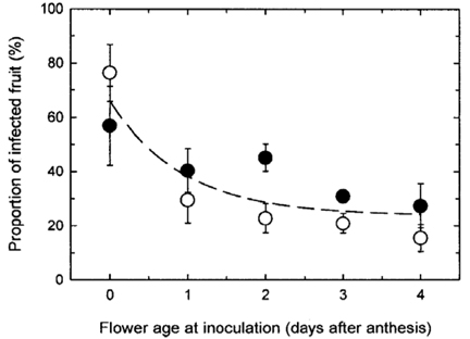 Blueberry infection graph