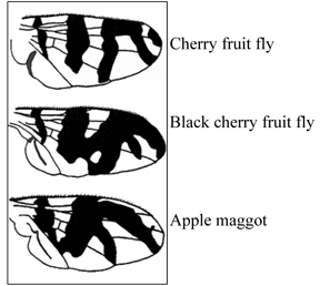 Wing patterns