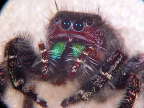 Consider, that pictures of big huge hairy spiders