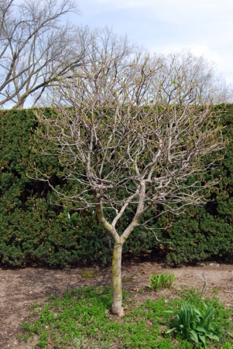 Native Plants For Michigan Landscapes Part 2 Shrubs Msu Extension