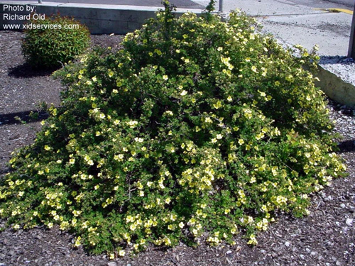 Native Plants For Michigan Landscapes Part 2 Shrubs