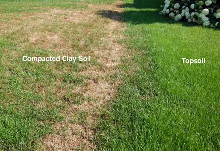 the secret to good lawns is good soil msu extension