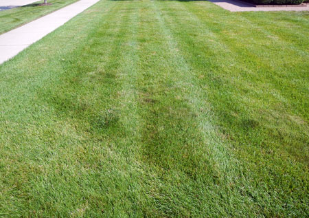 Lawn expectations