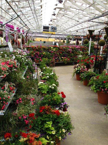Re-think how you market your ornamental plants - MSU Extension on green lavender, green beets, green bonsai, green bushes, green perennial, green garden design, green flowers, green tulips, green nature, green gardening, green shrubs, green butternut squash,