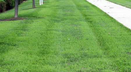 Crabgrass-infested boulevard.