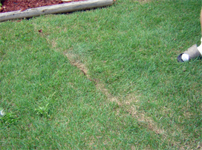 grass damage
