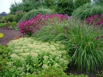 Tough Plants For Tough Places Grasses Msu Extension