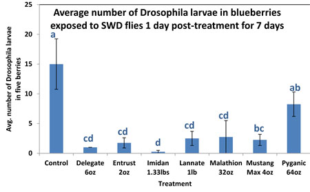 Average number of Drosophila larvae in blueberries exposed to SWD flies