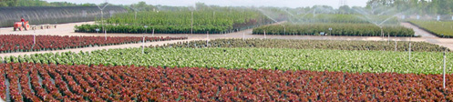 Nursery irrigation