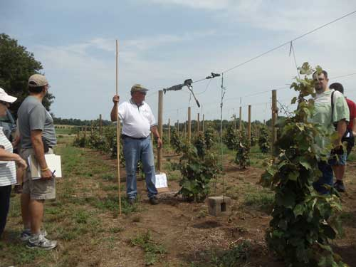 viticulture field day, grapes, wine