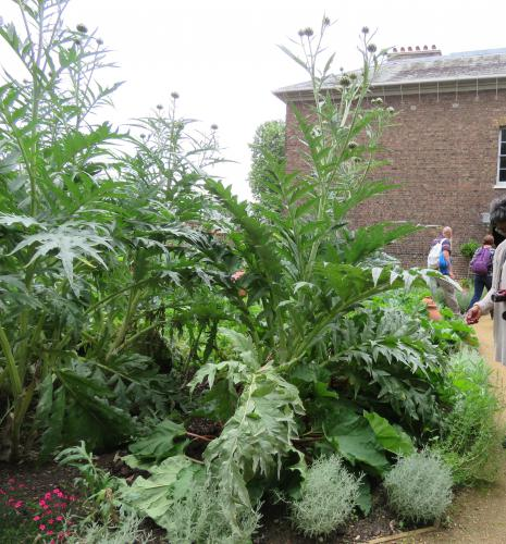 Artichokes have more to offer than you realize , MSU Extension