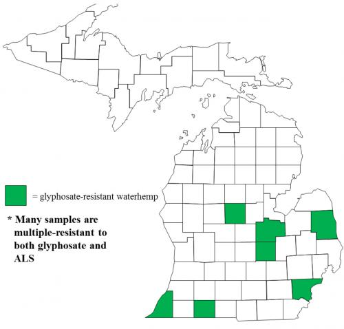Map of Common waterhemp distribution in Michigan