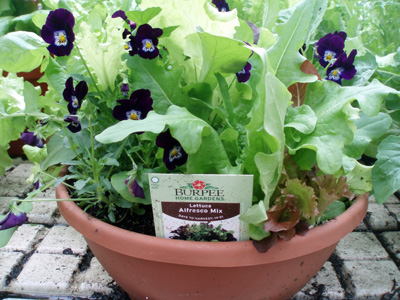 Lettuce bowl with pansies.