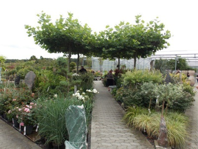 Danish garden plants photo 3
