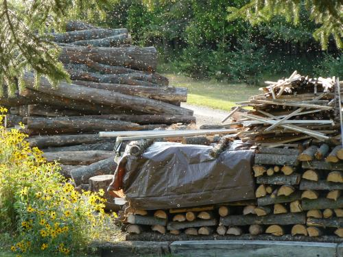 Hardwood logs being processed into stacked firewood for drying.