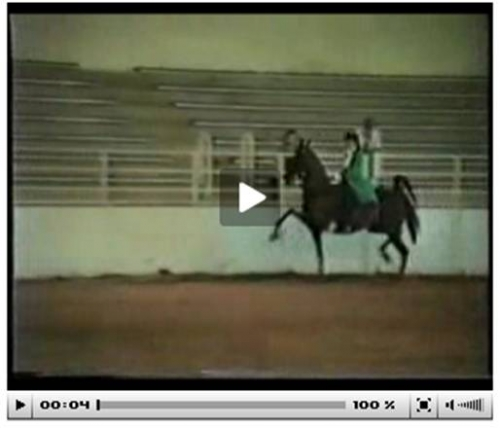 Video displaying the artificial gait of horses.