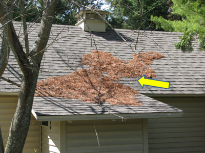 Needles, leaves, dead twigs and other debris allowed to collect on rooftops create another fire hazard to private property.