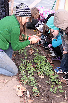 FoodCorps volunteer in garden with kids.