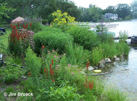 Naturalized shorelines help protect water quality