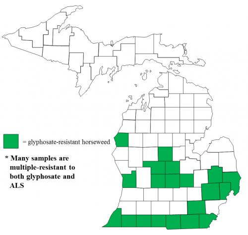 Map of Horseweed/marestail distribution in Michigan