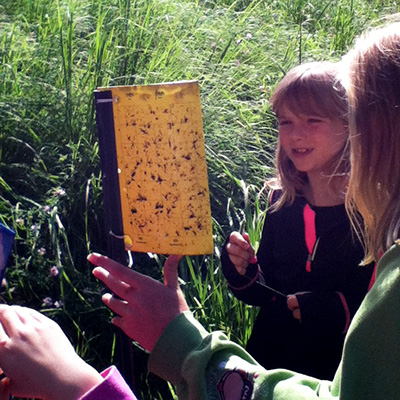 Campers looking at insect stick trap