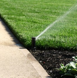 Lawn watering incorporating mulch.