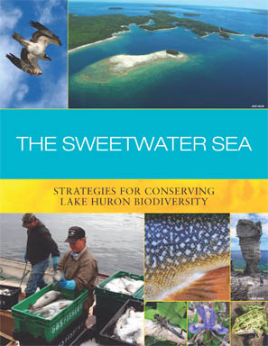 The Sweetwater Seas: An International Biodiversity Conservation Strategy for Lake Huron report cover image.