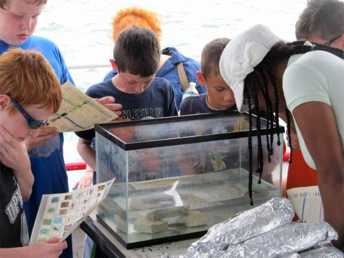 Students observing fish on Summer Discovery Cruise in July 2013
