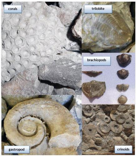Ancient fossils bring coastal tourism opportunities to life in