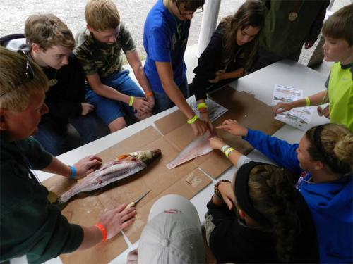 Kids cleaning and examining fish at Great Lakes Natural Resources Camp 2013 image.