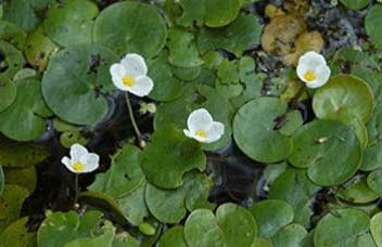 invasive water plants