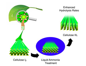 a potential pretreatment method for cellulose